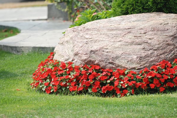 red floral accent placed by landscape architect