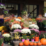 pumpkins and mums for fall landscaping ideas